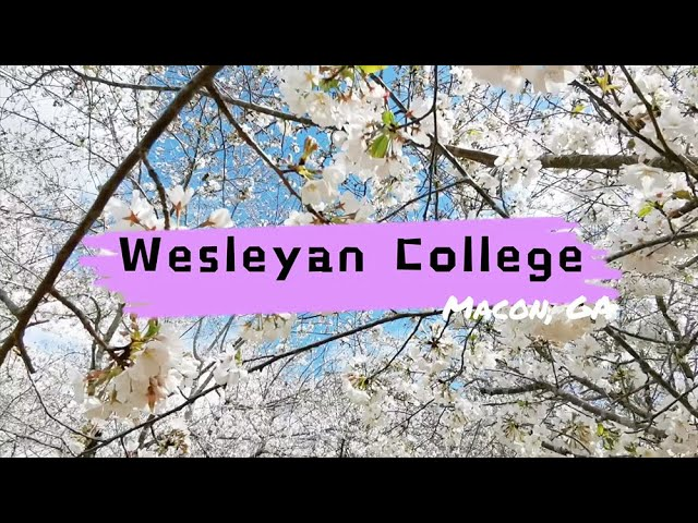 Wesleyan College Cherry Blossom Campus Tour | Macon GA