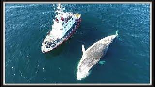 ब्लू व्हेल इतनी विशाल क्यूँ होती हैं ? Why Whales are so HUGE ? EXPLAINED IN HINDI