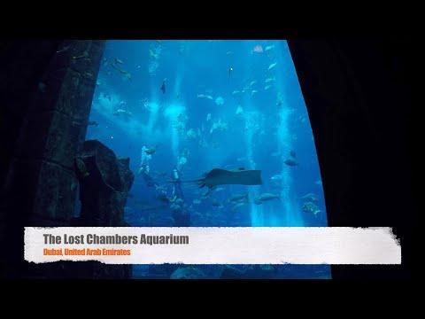 The Lost Chambers Aquarium | Atlantis | Palm Island | United Arab Emirates | UAE | 2020