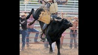 Rice Bull Riding Company