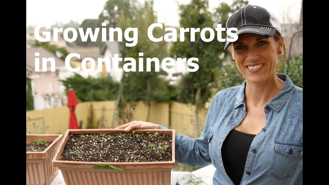Growing carrots in containers how to thin seedlings youtube - How to grow carrots in containers ...