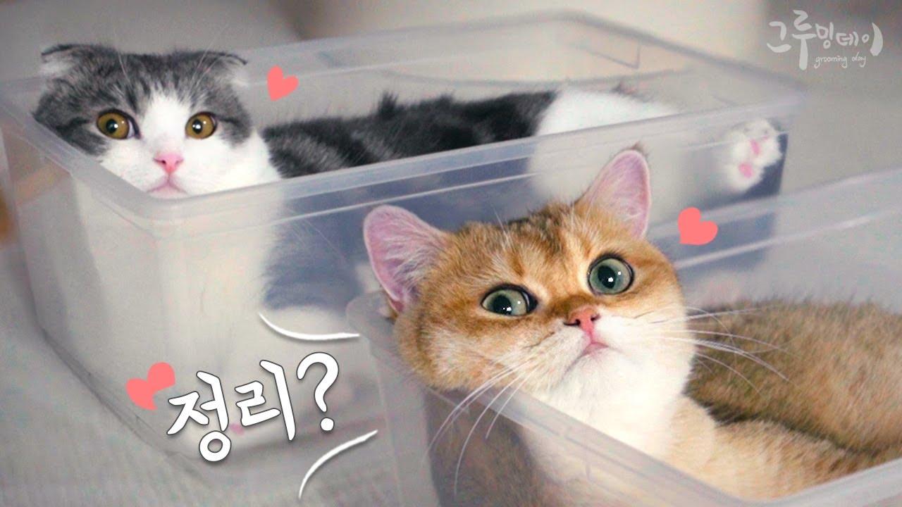 고양이 키우면 미니멀 하기 힘들어요