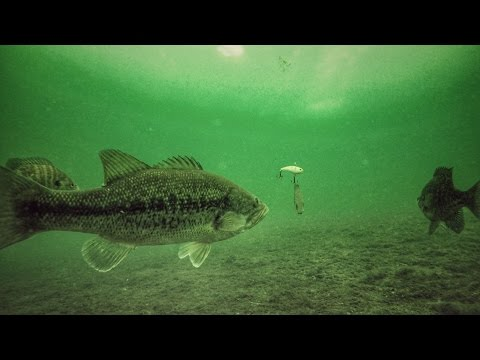 How To Ice Fish Bass With Crankbaits