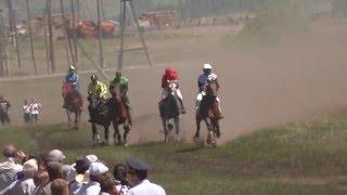 Рысь под седлом Краснотуранск 2015(Лошади-Horse–Animal-racing-конь-смотреть-онлайн-скачки)