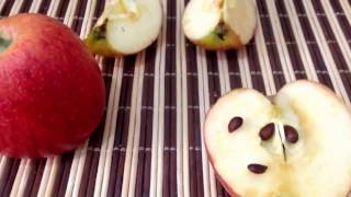 how to plant apple seeds in a pot 2