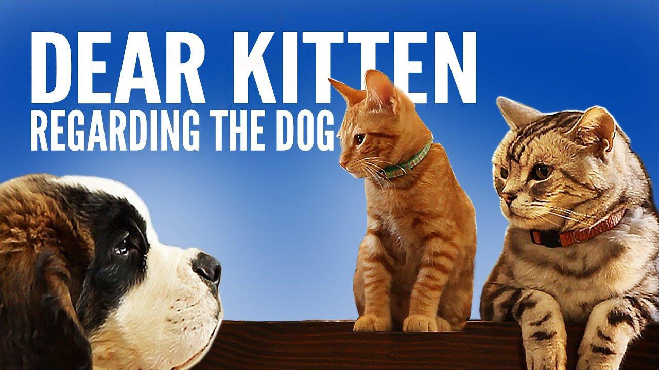 dog people meet kittens buzzfeed harry