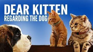 dear kitten regarding the dog