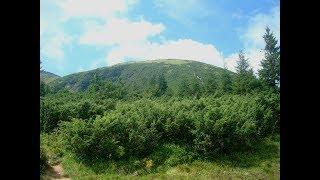 Закарпатская область. Карпаты. Гора Говерла. Zakarpattia Oblast. Carpathians. Mount Hoverla.