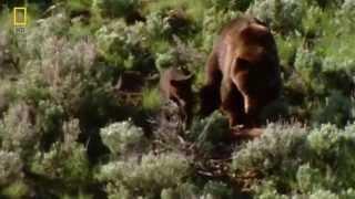 Долина медведей Гризли