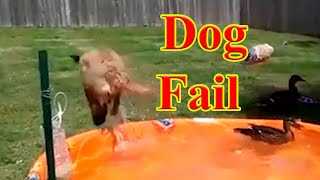 Best compilations cats and dogs. Funny Animals #7. Dog Fail.