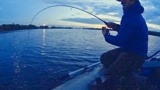 Fishing accident: monster pike unexpected attack. Рыбалка щука монстр атакует леща.