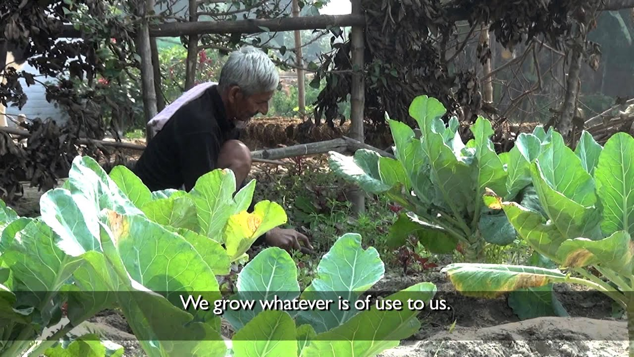Kitchen Garden Project Climate Smart Village Project Why Grow A Kitchen Garden Youtube