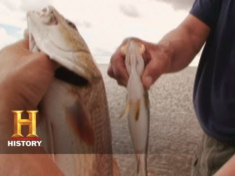 Swamp People: Joe and Tommy's Fishing Bet | History