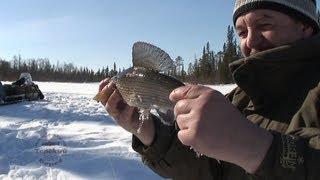 Рыбалка на Кольском  Ловля хариуса по Московски(http://www.tersky.ru Смотрите полнометражные документальные фильмы и короткие ролики на канале
