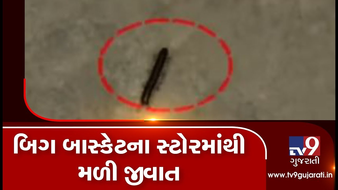 Ahmedabad: Health dept finds insects at 'Big Basket' store in Ahmedabad| TV9News