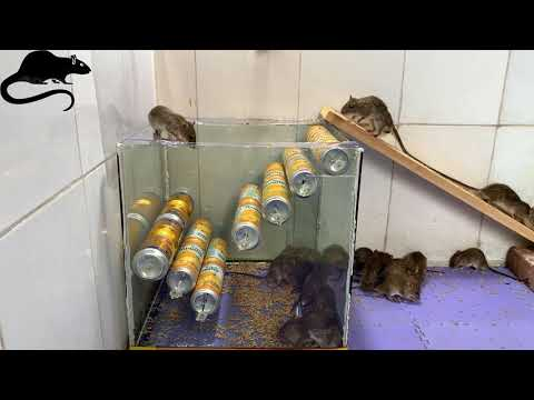 New Type Of Mouse Trap / How To Make Mousetrap / Mousetrap With Scrap