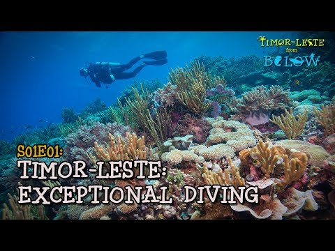 The Best Dive Destination You've Never Heard Of [4K] | Timor-Leste from Below (S01E01) |  SZtv