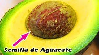 SEMILLAS DE AGUACATE CUANDO TE ENTERES LO QUE HACE thumbnail
