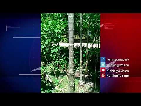 Maungdaw, Arakan on 31 August 2017: Eyewitness