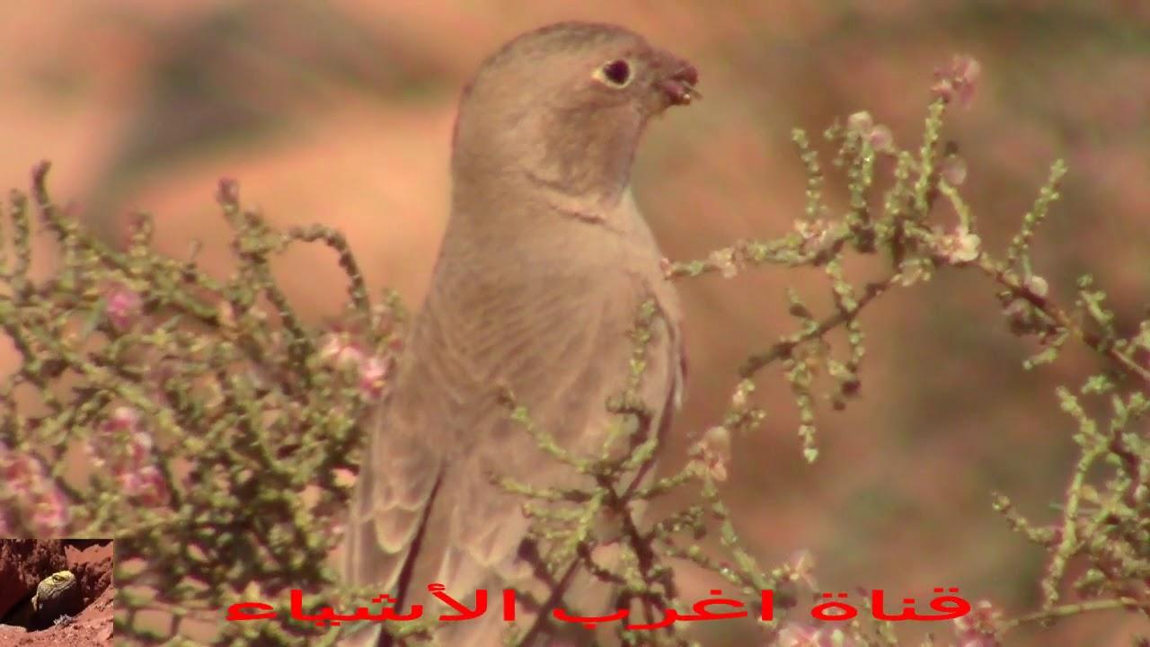 تعرف على مصدر غذاء بعض انواع الطيور
