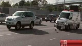 Ducks play chicken on freeway
