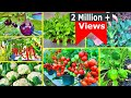 Super 8 Easy To Grow Vegetables For Beginners || Vegetables that can be Grown in Winters