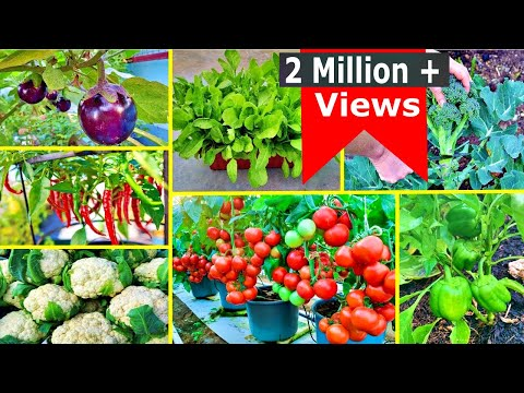 Super 8 Easy To Grow Vegetables For Beginners    Vegetables that can be Grown in Winters