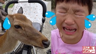 Deer Feeding at Nara Park in Japan