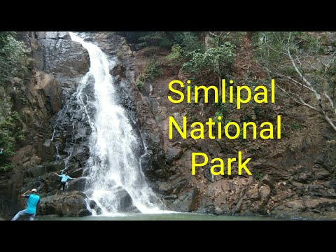 Simlipal National Park Tiger Reserve Forest