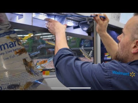 RESCUING the FISH from WALMART!!!
