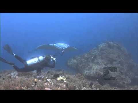 Pelagic Productions - Manta Ray & Diver- Raja Ampat, Papua Province,  Indonesia