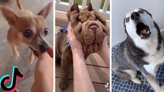 Ultimate Funniest Dogs and Cutest Puppies of TIKTOK Compilation