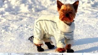 Зимняя одежда для собак! Комбинезон собака!
