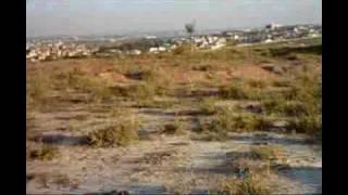 Baixar BLACK MAMUTE -1000 MILES - HOODOO GURUS