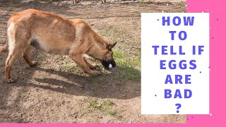 How To Tell If Eggs Are Bad: 5 Easy Ways To Check
