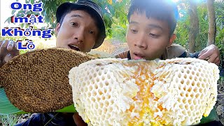 Catch The Big Forest Honeycomb