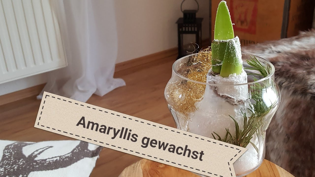 tisch deko mit amaryllis im glas weihnachten 2017 deko amaryllis youtube. Black Bedroom Furniture Sets. Home Design Ideas