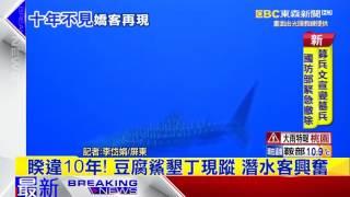 最新》睽違10年!豆腐鯊墾丁現蹤 潛水客興奮