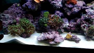 How To Setup Simple Cheap Reef Tank!