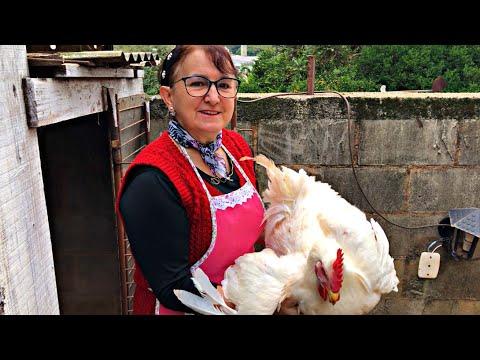 Como destroncar um galo caipira? Como preparar um galo caipira? Limpando galo caipira pra galinhada!