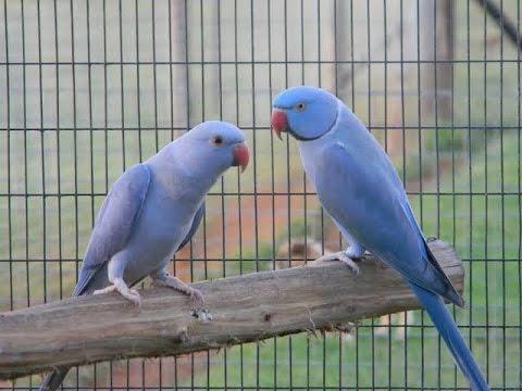 TOP 10 Best Parrot