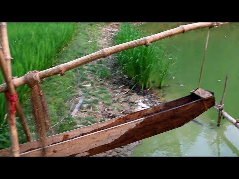 Primitive Irrigation Technology - Water Supply to the Paddy Field !