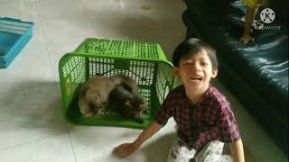 playing with my cats #funnycats