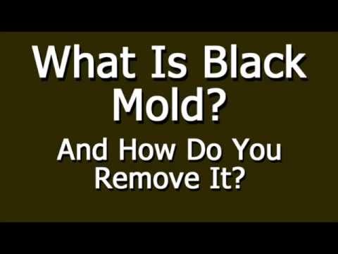what-is-black-mold-and-how-do-you-remove-it?