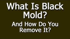 What Is Black Mold And How Do You Remove It?