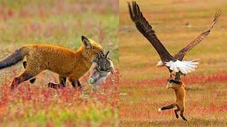 10 Times Predators Fought Over Same Prey