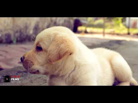 Short Movie BUDDY LIFE, Movie  For Dog lovers
