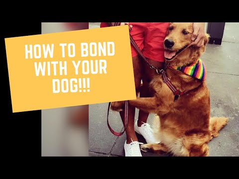 How To Bond With Your Dog!!!