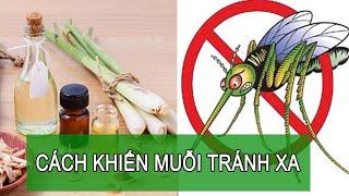 Cách khiến muỗi ''tránh xa'' trong những ngày nồm ẩm