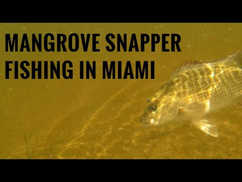 Secrets To Catching Mangrove Snapper Fishing - Biscayne Bay Miami